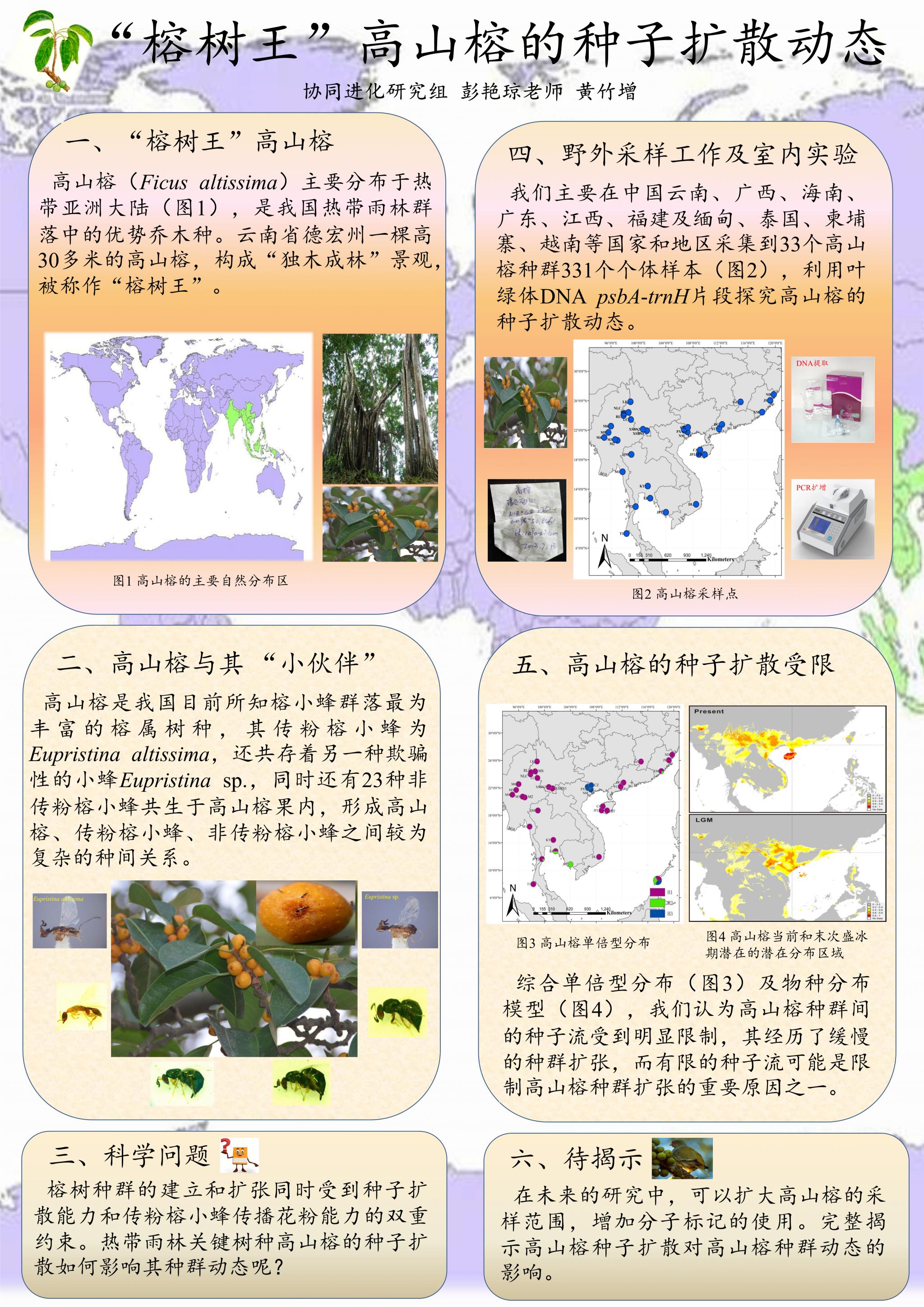 黄竹增-高山榕的种子扩散动态