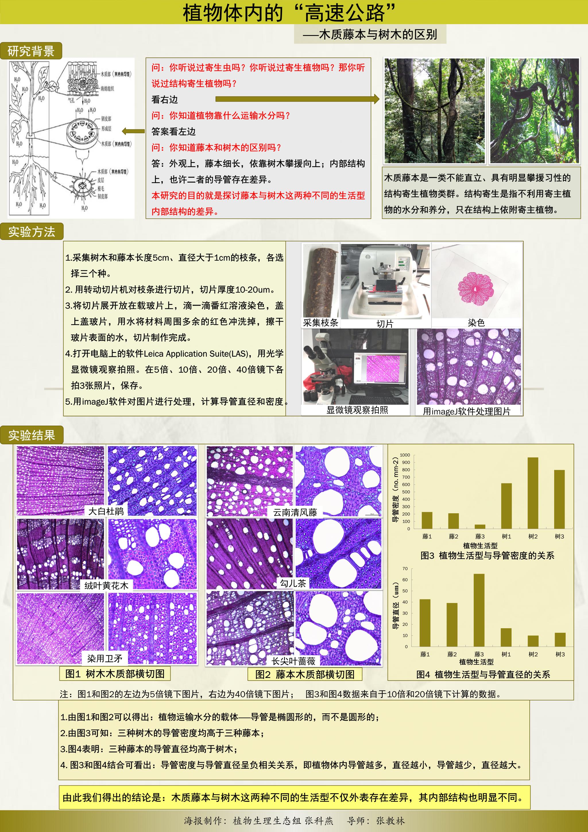 """张科燕 - 植物体内的""""高速公路""""——木质藤本与树木的区别"""
