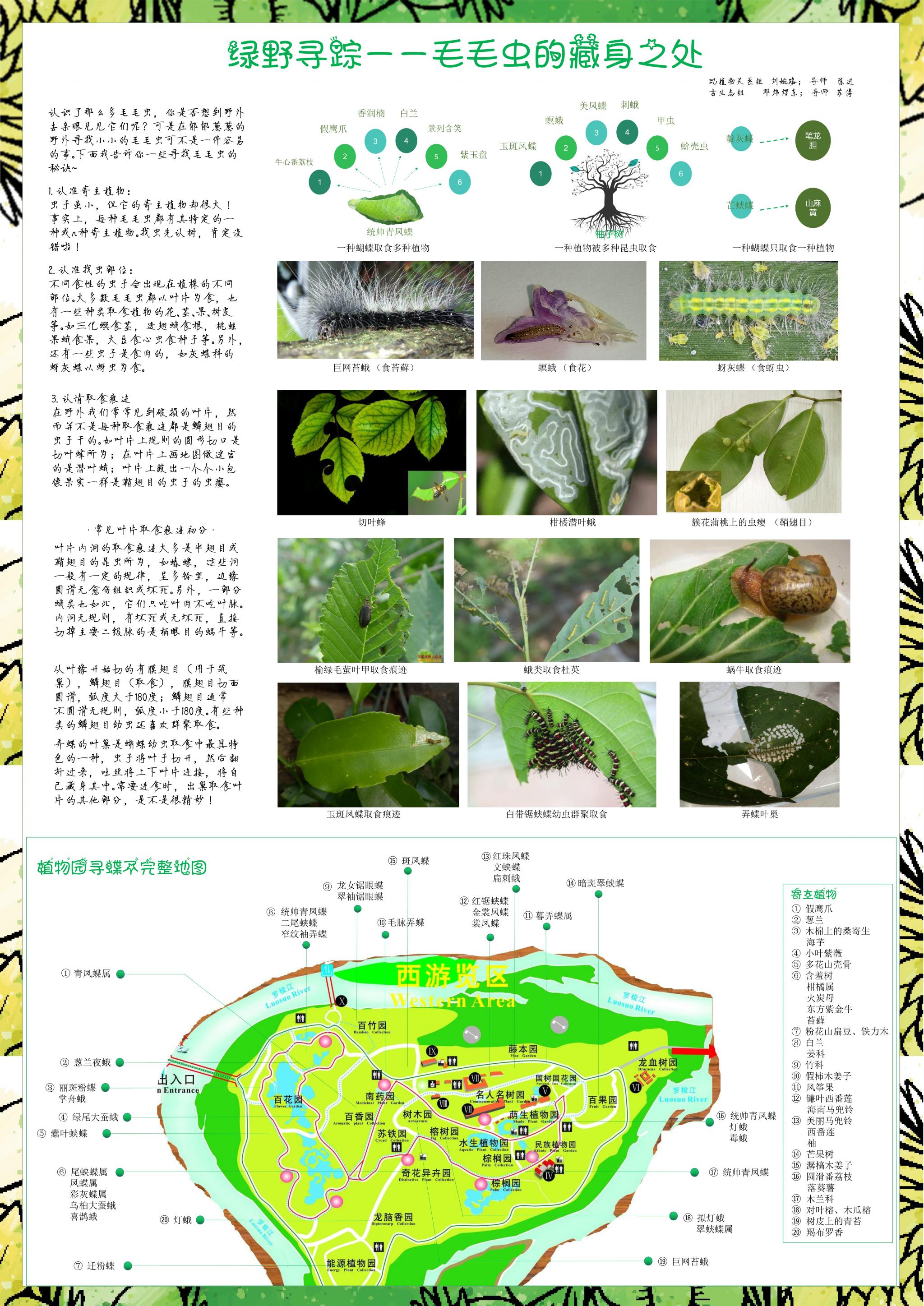 刘婉路 邓炜煜东- 绿野寻踪——毛毛虫的藏身之处