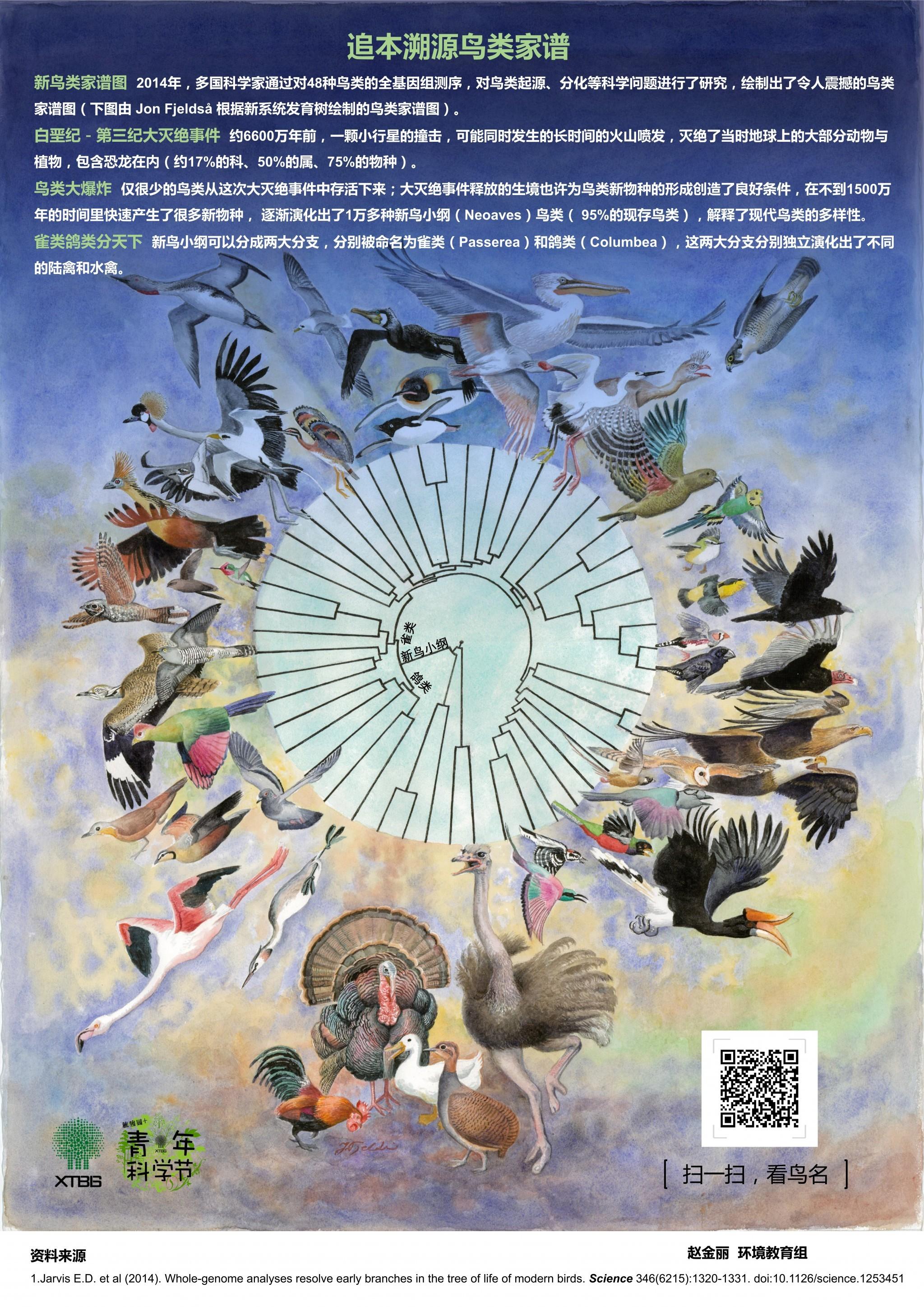 追本溯源鸟类家谱(作者:赵金丽)