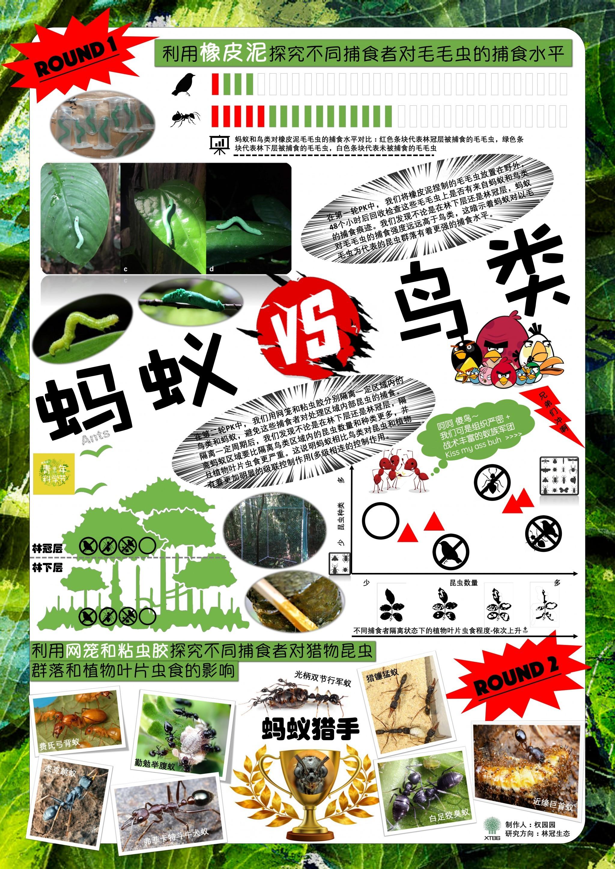 蚂蚁vs鸟类(作者:权园园)