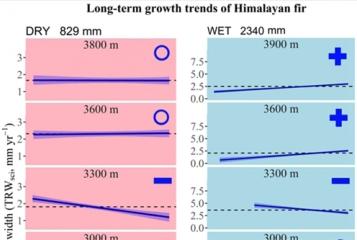气候变化如何改变喜马拉雅地区树木生长速率?