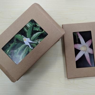 植物新种明信片