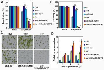 复合物调控植物ABA激素信号传导及种子萌发