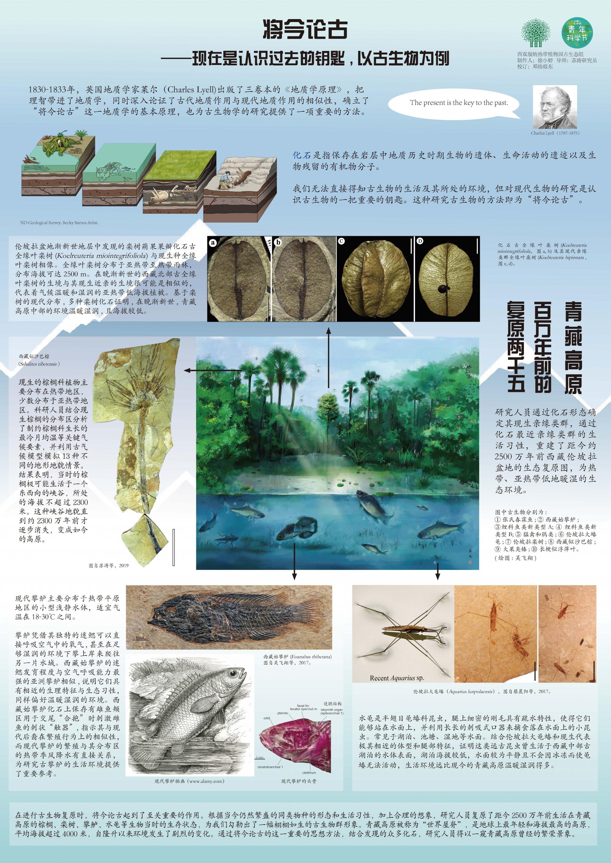 6-1 徐小婷_将今论古 现在是认识过去的钥匙,以古生物为例