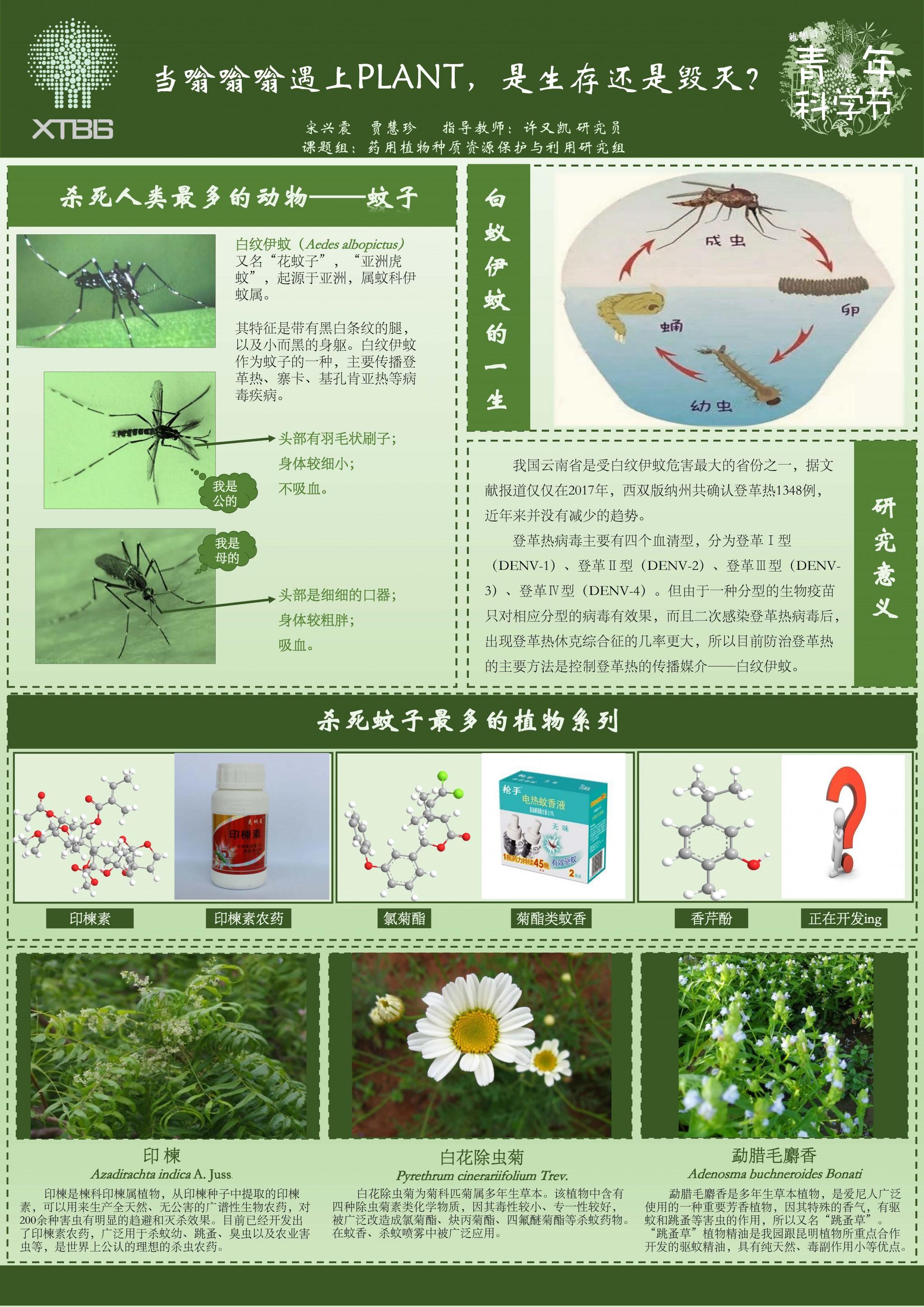 5-5 贾珍慧_当嗡嗡嗡遇上PLANT,是生存还是毁灭?